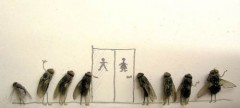 dead-flies-art-5.jpg