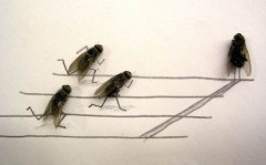 dead-flies-art-0.jpg
